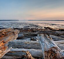 Knarled on Livingston Bay by Dale Lockwood