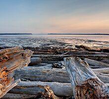 Knarled on Livingston Bay by Dale Lockwood