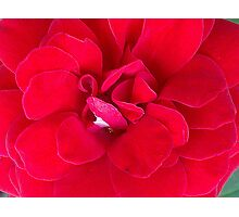 Really Ruby Red Photographic Print