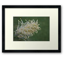 Yellow and gorgeous Framed Print