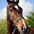 Portrait of a horse. by joche