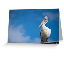 Pelican Stare Greeting Card