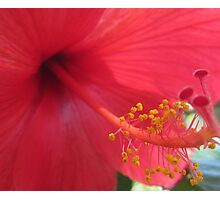 How the Stamen gets it Lusty Dust... Photographic Print