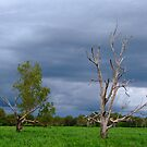 The storm clouds build - Yellow River, Kakadu, Northern Territory by Karen Stackpole