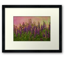Dreamy Lupin Framed Print