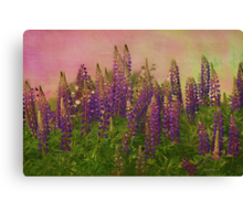 Dreamy Lupin Canvas Print