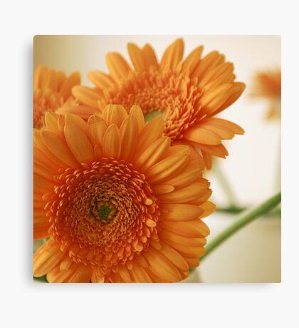 Natural Orange Canvas Print