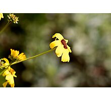 Wilted yellow flower  Photographic Print