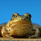 Ribbit by milkayphoto
