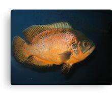 Piranha Fish Canvas Print