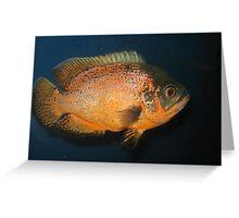 Piranha Fish Greeting Card
