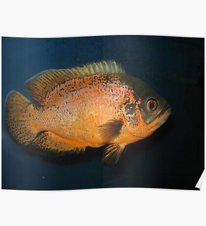 Piranha Fish Poster
