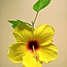 My Yellow Hibiscus by Shulie1