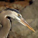 Avian Portrait by artisandelimage