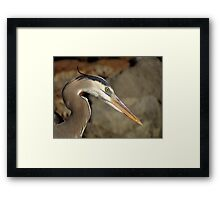 Avian Portrait Framed Print