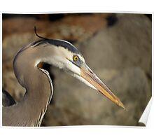Avian Portrait Poster