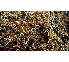 Bubble Sea Photographic Print