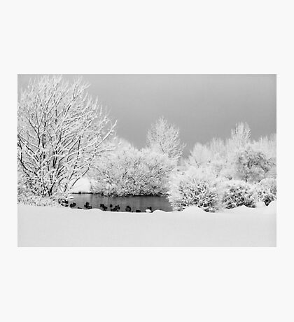 From the botanical garden Photographic Print