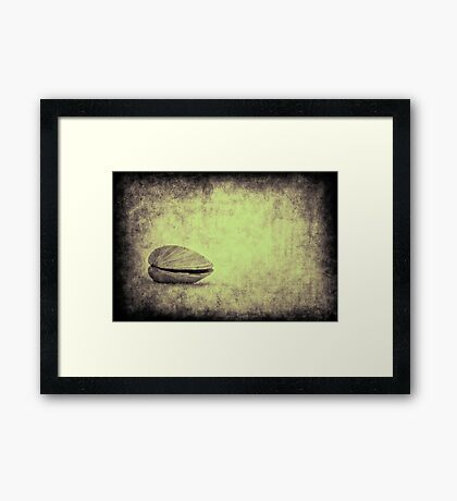 Sea Saw Shell Framed Print