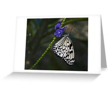 Rice Paper (Idea leuconoe) Greeting Card