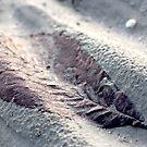 sandy leaf by yvesrossetti