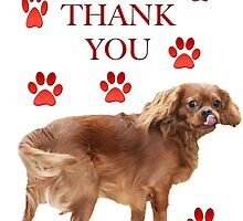 Thank You Card From A Cavalier King Charles Spaniel by daphsam