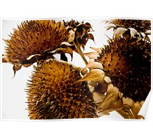 Sunflowers in winter Poster
