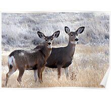 Mule Deer Doe's Poster