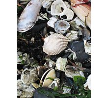 Beach Litter? Photographic Print