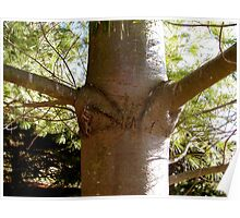 and this tree grew a bra . .  Poster