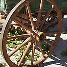 Wagon Wheel by Laurie Perry