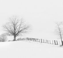Winter White by Steve Silverman