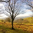 A Walk On The Quantocks  .. by Mike  Waldron