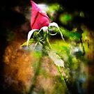 Grunge Rose by J. D. Adsit
