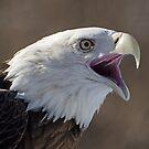 An Eagle for Viv! by cherylc1