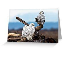 Snowy Owl Family Greeting Card