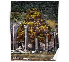 A Tree Grows In Ephesus Poster