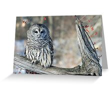 Barred owl for Jean Greeting Card
