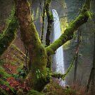 Latourell Falls II by Tula Top