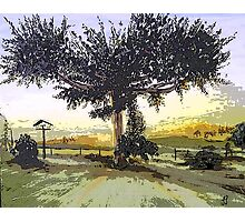 Ngaroto Tree in the Sunset Photographic Print