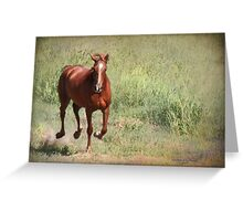 Here She Comes Greeting Card