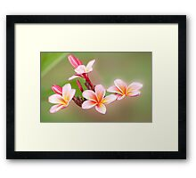 Tropical Pink - frangapani flower Framed Print