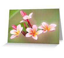 Tropical Pink - frangapani flower Greeting Card