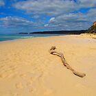Beached Driftwood by Michael John