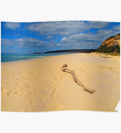 Beached Driftwood Poster