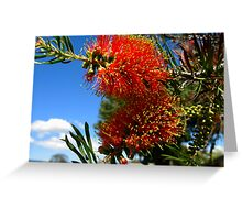Bottlebrush - Callistemon Greeting Card