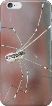 itsby bitsy spider by Maryanne Lawrence