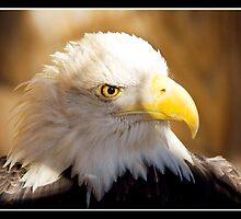 Eagle Eye by KBritt