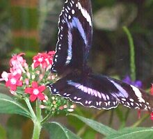 Butterfly 1013 by Angelica Frances