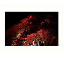 Snooted Hermit Crab Art Print